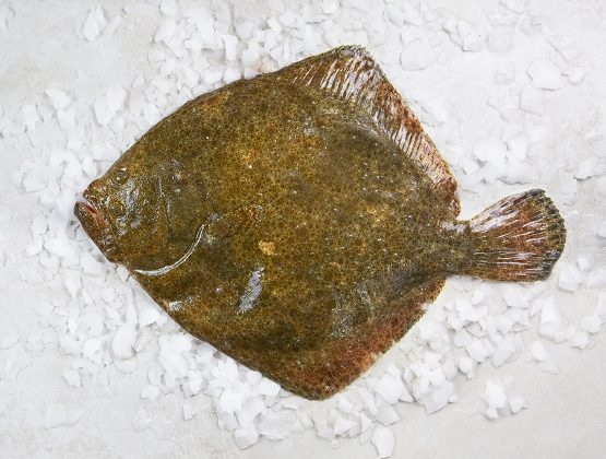 Gros turbot entier